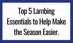 Top 5 Lambing Essentials to Help Make the Season Easier.